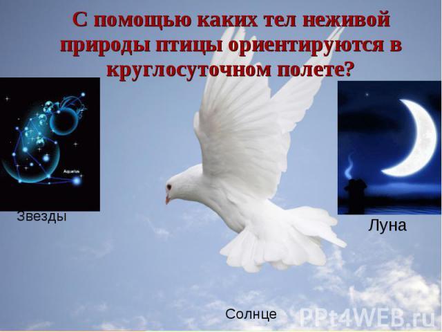 С помощью каких тел неживой природы птицы ориентируются в круглосуточном полете?