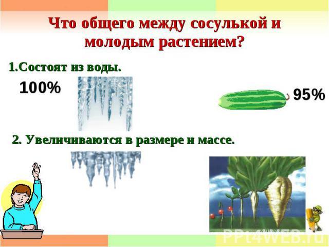Что общего между сосулькой и молодым растением? 1.Состоят из воды.2. Увеличиваются в размере и массе.