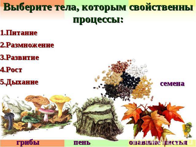 Выберите тела, которым свойственны процессы:1.Питание2.Размножение3.Развитие4.Рост5.Дыхание