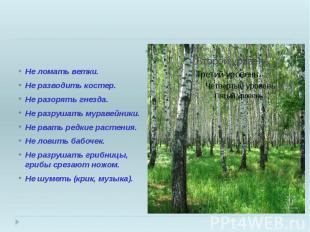 Законы леса. Не ломать ветки. Не разводить костер. Не разорять гнезда. Не разруш