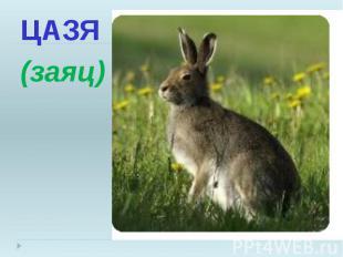 ЦАЗЯ ЦАЗЯ (заяц)