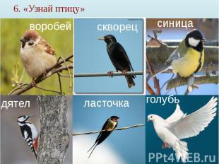 6. «Узнай птицу»
