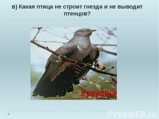 в) Какая птица не строит гнезда и не выводит птенцов? в) Какая птица не строит г