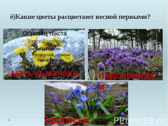 ё)Какие цветы расцветают весной первыми?