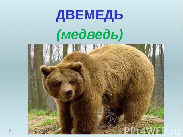 ДВЕМЕДЬ ДВЕМЕДЬ (медведь)