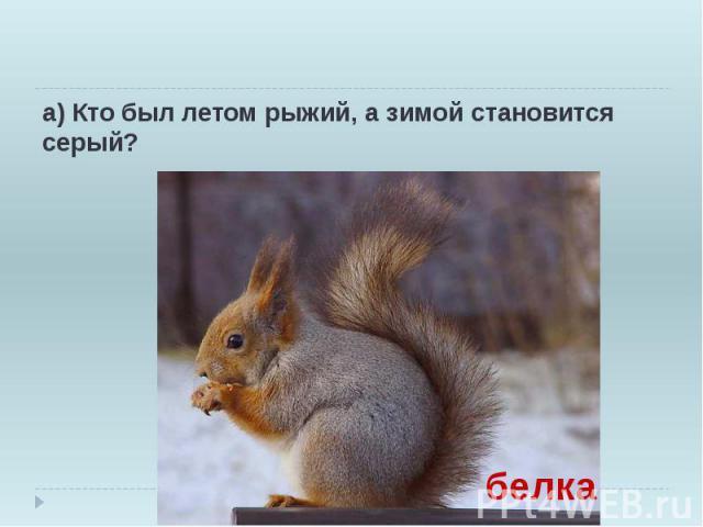 а) Кто был летом рыжий, а зимой становится серый?