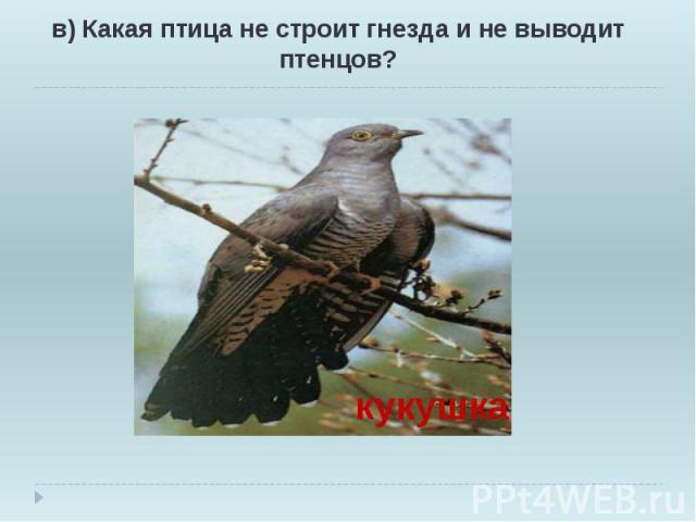 в) Какая птица не строит гнезда и не выводит птенцов? в) Какая птица не строит гнезда и не выводит птенцов?