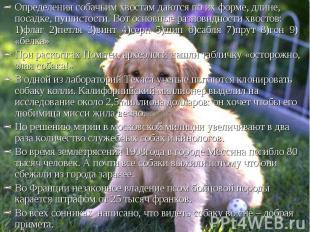 Определения собачьим хвостам даются по их форме, длине, посадке, пушистости. Вот