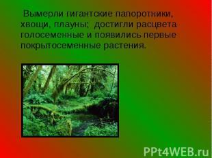 Вымерли гигантские папоротники, хвощи, плауны; достигли расцвета голосеменные и