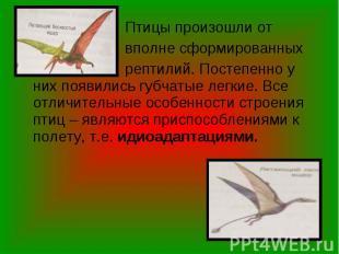 Птицы произошли от Птицы произошли от вполне сформированных рептилий. Постепенно