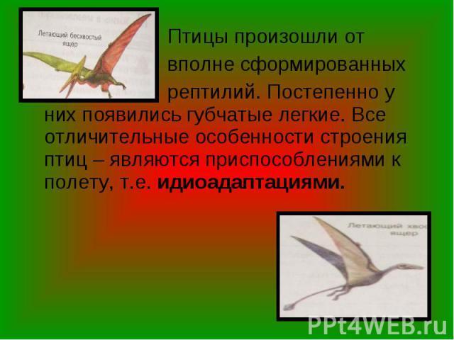 Птицы произошли от Птицы произошли от вполне сформированных рептилий. Постепенно у них появились губчатые легкие. Все отличительные особенности строения птиц – являются приспособлениями к полету, т.е. идиоадаптациями.