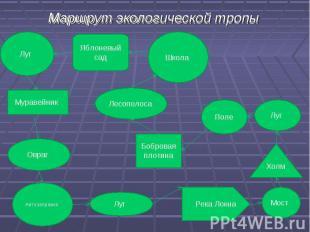 Маршрут экологической тропы Маршрут экологической тропы