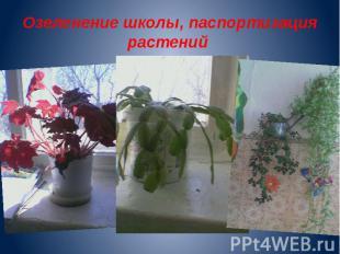 Озеленение школы, паспортизация растений