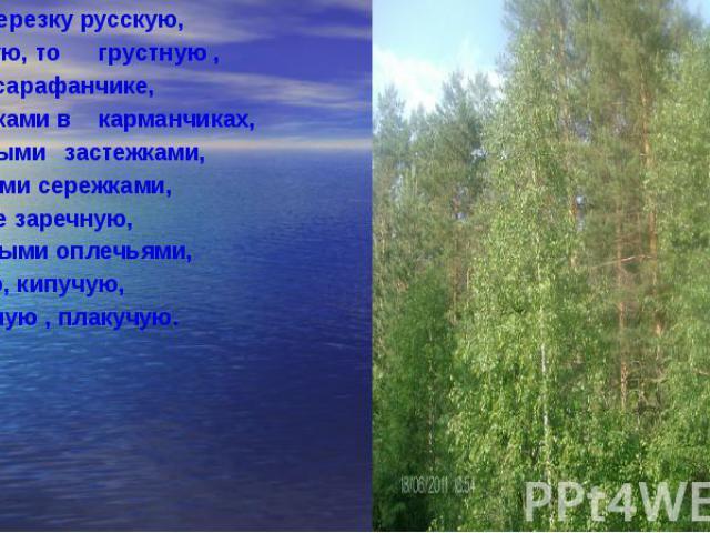 Люблю березку русскую, Люблю березку русскую, То светлую, то грустную , В белом сарафанчике, С платочками в карманчиках, С красивыми застежками, С зелеными сережками, Люблю ее заречную, С нарядными оплечьями, То ясную, кипучую, То грустную , плакучую.