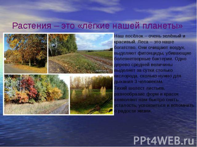 Растения – это «лёгкие нашей планеты» Наш посёлок – очень зелёный и красивый. Леса – это наше богатство. Они очищают воздух, выделяют фитонциды, убивающие болезнетворные бактерии. Одно дерево средней величины выделяет за сутки столько кислорода, ско…