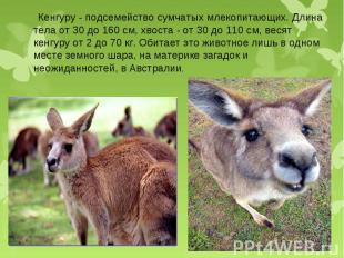 Кенгуру - подсемейство сумчатых млекопитающих. Длина тела от 30 до 160 см, хвост