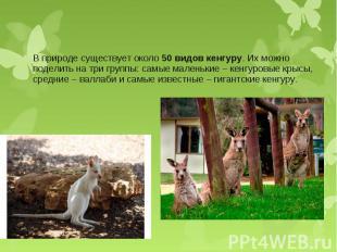 В природе существует около50 видов кенгуру. Их можно поделить на три групп