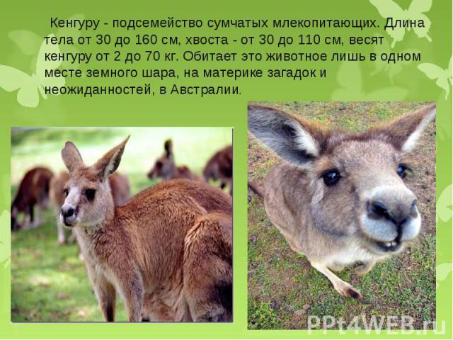 Кенгуру - подсемейство сумчатых млекопитающих. Длина тела от 30 до 160 см, хвоста - от 30 до 110 см, весят кенгуру от 2 до 70 кг. Обитает это животное лишь в одном месте земного шара, на материке загадок и неожиданностей, в Австралии. Кенгуру - подс…