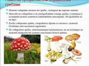 Можно собирать только те грибы , которые вы хорошо знаете. Можно собирать только