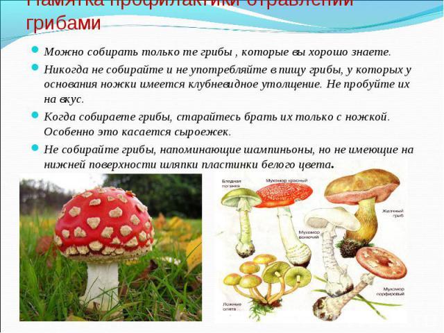 Можно собирать только те грибы , которые вы хорошо знаете. Можно собирать только те грибы , которые вы хорошо знаете. Никогда не собирайте и не употребляйте в пищу грибы, у которых у основания ножки имеется клубневидное утолщение. Не пробуйте их на …