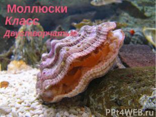 Моллюски Класс Двустворчатые