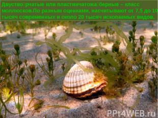 Двустворчатые или пластинчатожаберные – класс моллюсков.По разным оценками, насч