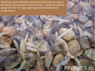 Поскольку двустворчатые моллюски получают питание и кислород для дыхания только