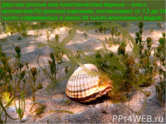 Двустворчатые или пластинчатожаберные – класс моллюсков.По разным оценками, насчитывают от 7,5 до 10 тысяч современных и около 20 тысяч ископаемых видов.