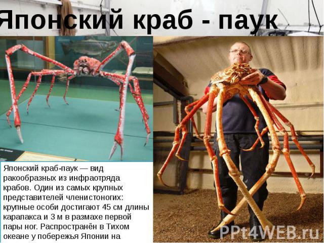Японский краб-паук — вид ракообразных из инфраотряда крабов. Один из самых крупных представителей членистоногих: крупные особи достигают 45 см длины карапакса и 3 м в размахе первой пары ног. Распространён в Тихом океане у побережья Японии на глубин…