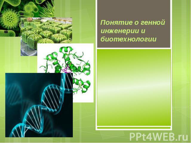 Понятие о генной инженерии и биотехнологии
