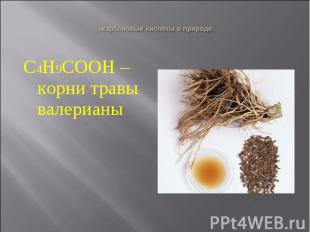 С4Н9СООН – корни травы валерианы С4Н9СООН – корни травы валерианы
