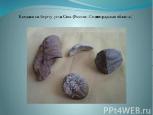 Находки на берегу реки Сясь (Россия, Ленинградская область)
