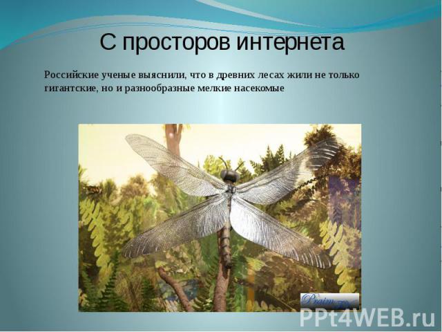 Ксюша Киселёва, ученица 558-й школы СПб, на берегу реки Сясь (Россия, Ленинградская область) нашла окаменелости загадочных насекомых!