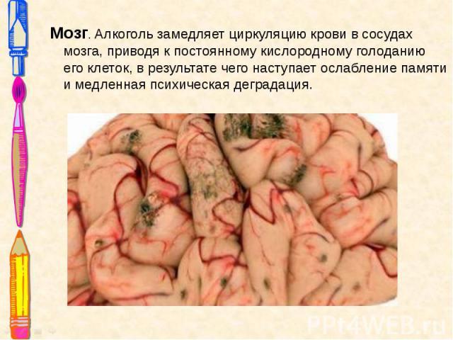 Мозг. Алкоголь замедляет циркуляцию крови в сосудах мозга, приводя к постоянному кислородному голоданию его клеток, в результате чего наступает ослабление памяти и медленная психическая деградация. Мозг. Алкоголь замедляет циркуляцию крови в сосудах…