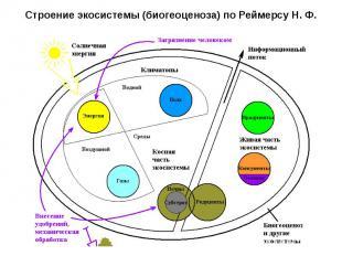 Строение экосистемы (биогеоценоза) поРеймерсу Н. Ф.