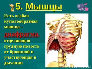 5. Мышцы