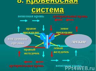 8. Кровеносная система