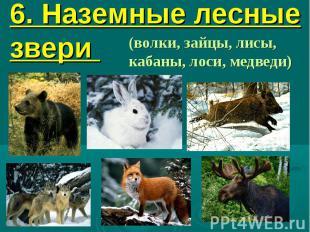 6. Наземные лесные звери