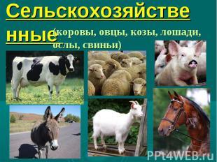 9. Сельскохозяйственные звери