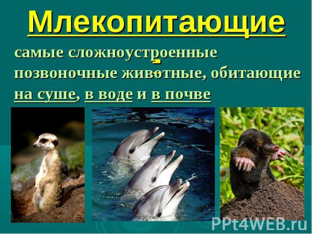 1. Млекопитающие -