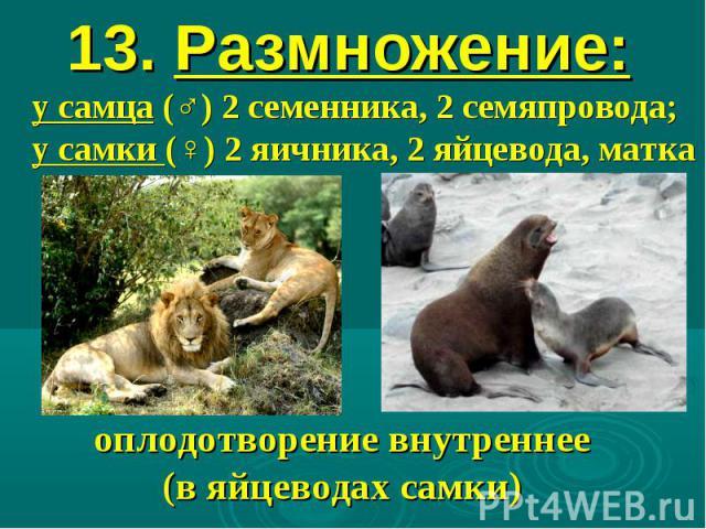13. Размножение: