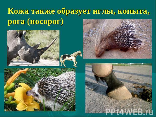 Кожа также образует иглы, копыта, рога (носорог)