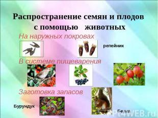 Распространение семян и плодов с помощью животных