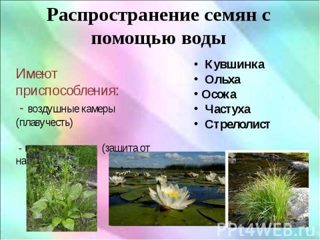 Распространение семян с помощью воды