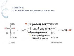 Стадия 8: окисление малата до оксалоацетата