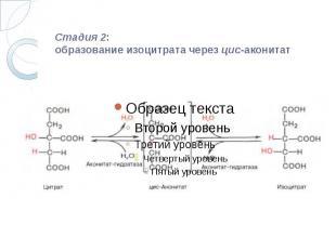 Стадия 2: образование изоцитрата черезцис-аконитат