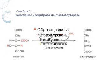 Стадия 3: окисление изоцитрата до α-кетоглутарата