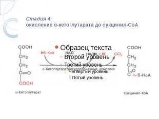 Стадия 4: окисление α-кетоглутарата до сукцинил-СоА