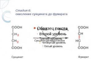 Стадия 6: окисление сукцината до фумарата