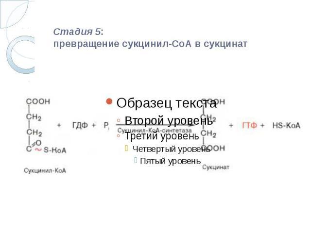 Стадия 5: превращение сукцинил-СоА в сукцинат